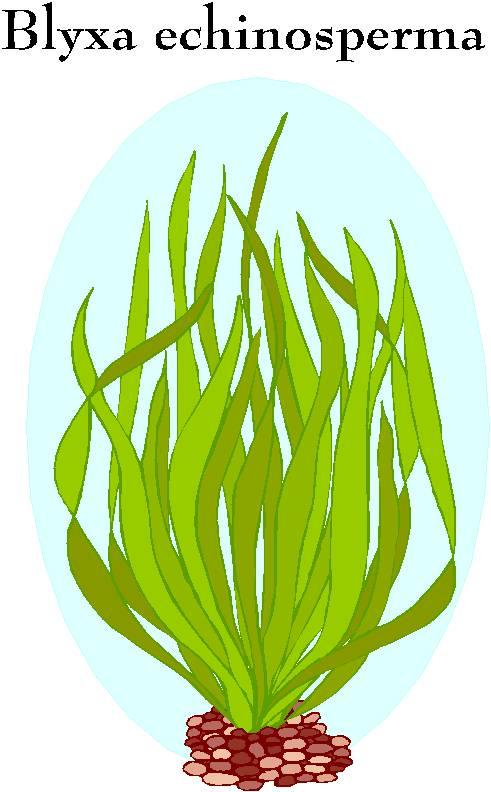 Aquarium Kostenlos